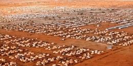 Kenya oo xirayso xeryaha Qaxootiga Dhadhaab iyo Kakuma