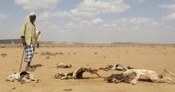 Cattle dying as drought strikes Jubaland, Somalia