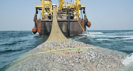 Somalia's fish sold on black market ahead of election