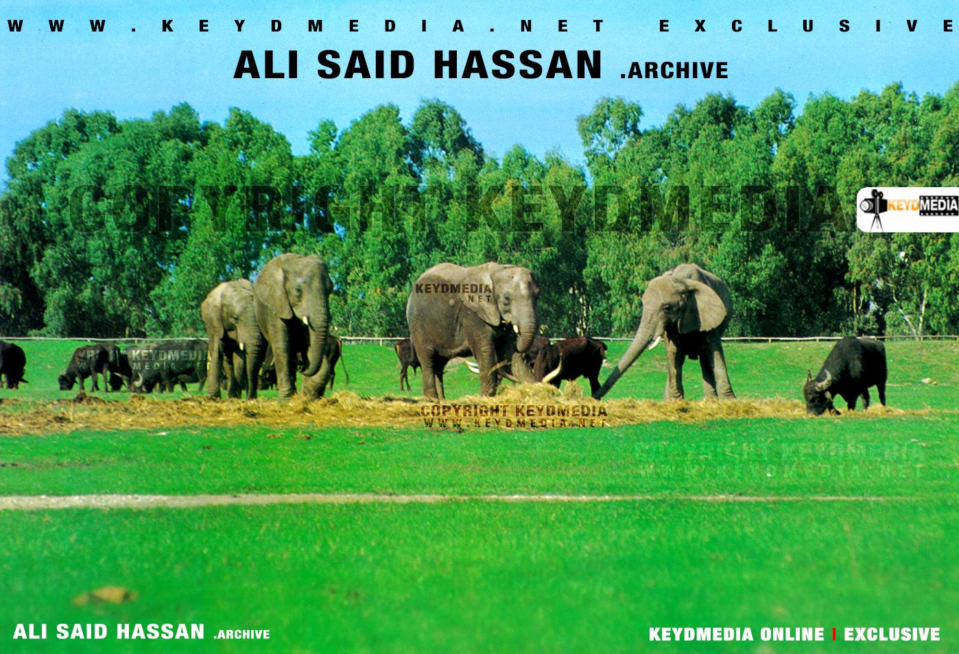 Bandhiga Asbuuca: Somali National Park - Kismaayo - 1978 Picture by Ali Said Hassan